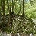 """Die Felsen brechen unter der Last der Bäume """"zusammen"""" ☺"""