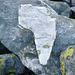 Laune der Natur: Afrika im Tessin ?