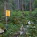 Einstieg in einem wunderschönen Urwald. Bestens wbw-signalisiert, ist der Weg nicht zu verfehlen.
