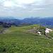 Sitze im Gras am Gipfel, mampfe Salsiz und blicke hinüber in Richtung Zugersee. Zu sehen, Kleiner und Grosser Mythen, Haggenspitz, Rigi. Und letzte Schneeresten.