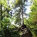 Bezeichnend für den gesamten Weg: Mehr Wurzeln als sonst irgendwas, spannende Baum-Stein-Kombinationen, urige Vegetation