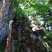 Zweite Kletterstelle unterm Ameislispitz, hier hab ich den Helm aufgezogen. Man klettert ca. 10m weit hoch, dann geht es mit einem normalen Weg weiter. Es gibt einen Trampelpfad rechts herum, der endet aber mit einem schlammigen Couloiraufstieg. Hier direkt hoch (der Markierung entlang) ist wesentlich einfacher.