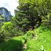 Immer wieder zwischendrin: wunderschöne Weglein den Grat entlang, Enziane, knorrige Bäume...