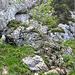 Der Beginn des Klettersteigs wenige Meter weiter oben