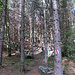durch wunderbare Wälder aufwärts