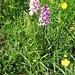 Orchidee, non so di che specie.