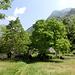 dem Verfall preisgegebene Alpe im Tal