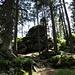 viele kleine Felsgebilde im Wald