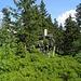 auf der Kammhöhe zwischen Zwercheck und Jezerni hora