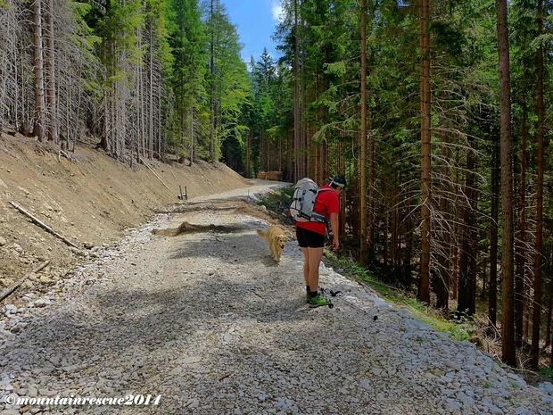 Eine breite Forststraße ist zu überschreiten