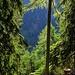 Sonne im steilen Bergwald