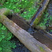 im Wald ein kleiner Brunnen, Wasser  für  Tirbja