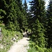 Der Weg geht in den Wald hinein. Der Steig ist frisch renoviert