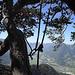 Rappel installé entre deux arbres