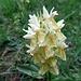 ... mit vielen der speziellen Orchideen ...