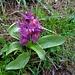 ... zur nächsten Orchidee ...