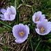 ... stellen den Abschluss des mannigfaltigen Blumenreigens dar