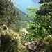 Tiefblick auf Vierwaldstättersee
