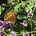 Alles blüht - den Schmetterling freuts