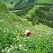 Kraxelei im hohen Gras