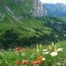 Schön sind sie, die Ostschweizer Voralpen!