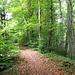 Lange im Wald unterwegs