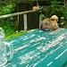 Pause auf der Fereinalm (1406m). Das Huhn setzte sich einfach neben mein Bierglas und schlief ein. :)
