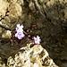 Blüten in der Steinwüste