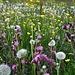 Blumenwiesen gabs zu genüge