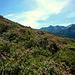 Alpenrosenhänge säumen den Riepasee.