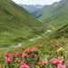 Schöne Bergflora im Vergaldner Tal