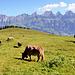 Beaucoup de Swissness dans cette photo...