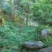 Magie del bosco 2