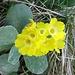 edle Blumen 1