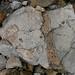 Faszinierende Geologie im Alpstein