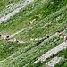 Auch Kühe lieben Wanderwege