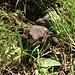 Diese Kröte hat Maxl noch entdeckt