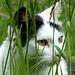 Und noch ne Katze mit grasgrünen Augen!