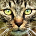 Katzen schleichen am Ortsrand von Champéry herum!