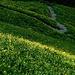 Der idyllische Weg schlängelt sich durch blühende Wiesen hinab.