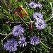 Blumen- und Farben-Vielfalt