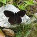 Val d'Ambra - Schmetterling