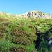 Viele Alpenrosen - Blick auf Monte Orsiera