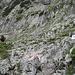 Wegverzweigung am Talschluss des Höllentalanger - links zur Zugspitze führt unsere Route, rechts ein Steig über die Riffelscharte