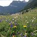 Viele Blumen kurz nach dem Start in Simplon Dorf