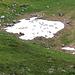 Liebe Schafe, so heiss war es nun auch wieder nicht, als dass man sich auf dem Schneefeld abkühlen müsste...?!