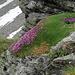 geschmückte  Felsen oberhalb  Blausee