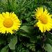 ... dieselben Blumen im Detail