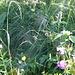 Hohes nasses Gras und Spinnennetze erschweren den Aufstieg zum Chaux de Culand