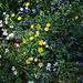 Bunte Blumen am Arzberg